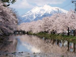 桜と岩木山